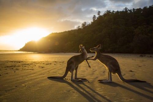Umzug Australien